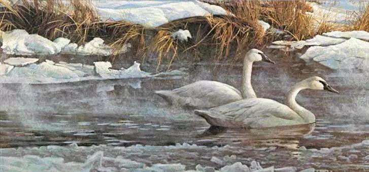 加拿大艺术家 Robeert bateman动物绘画插图55