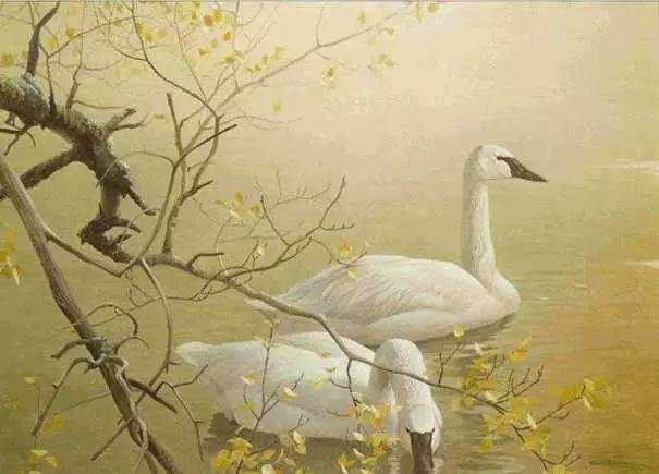 加拿大艺术家 Robeert bateman动物绘画插图57