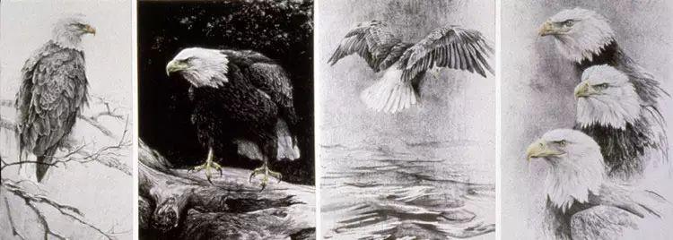 加拿大艺术家 Robeert bateman动物绘画插图59