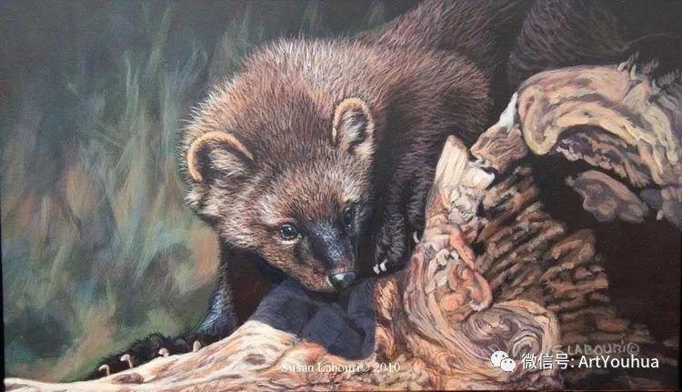 动物 美国Susan Labouri作品欣赏插图5