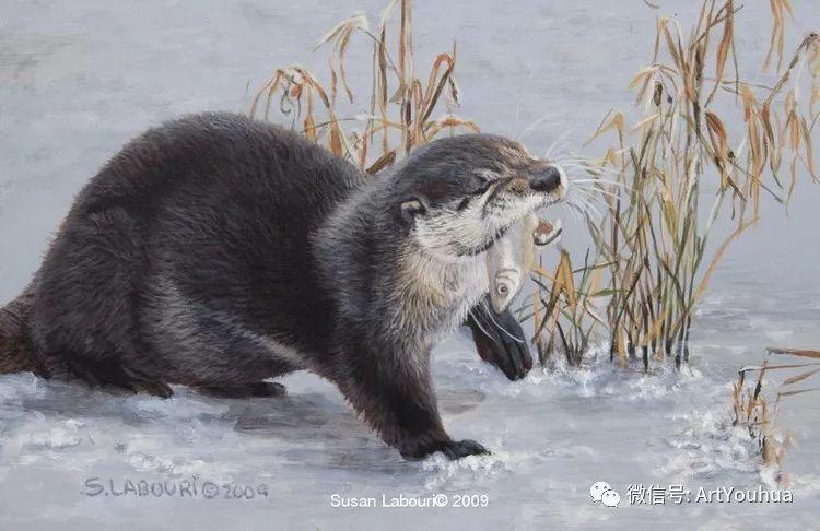 动物 美国Susan Labouri作品欣赏插图27