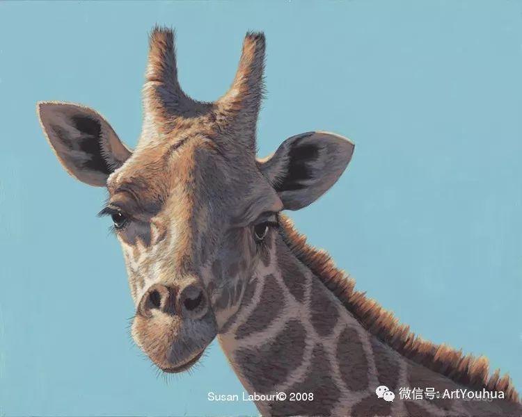 动物 美国Susan Labouri作品欣赏插图31