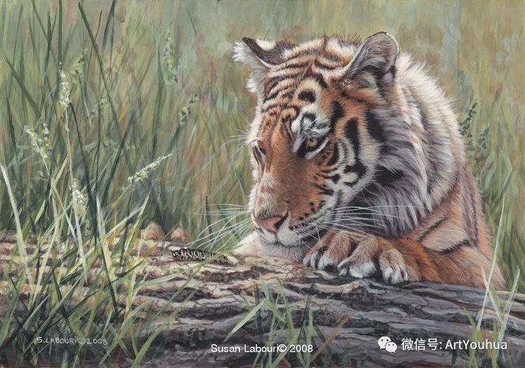 动物 美国Susan Labouri作品欣赏插图41