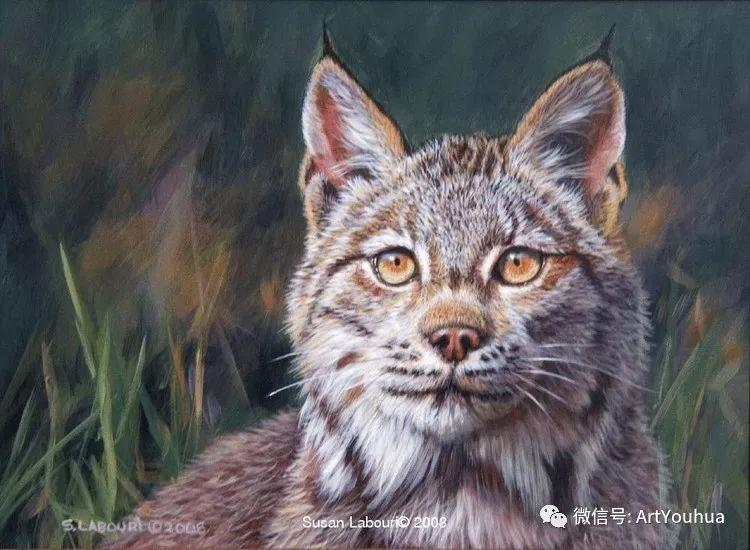 动物 美国Susan Labouri作品欣赏插图43