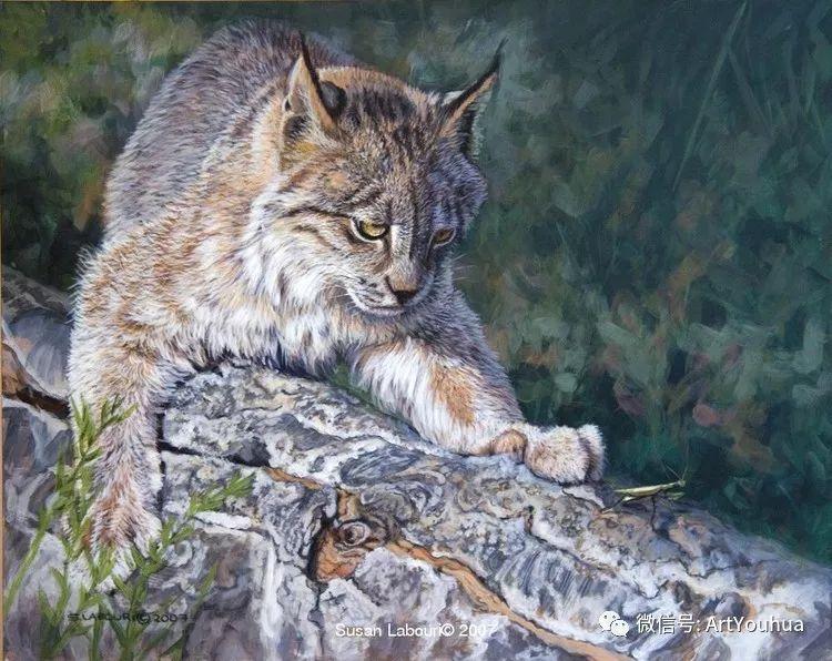 动物 美国Susan Labouri作品欣赏插图45