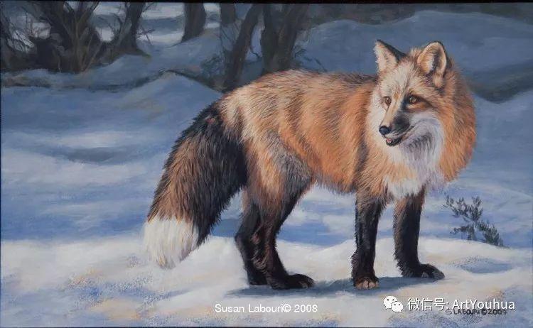 动物 美国Susan Labouri作品欣赏插图55
