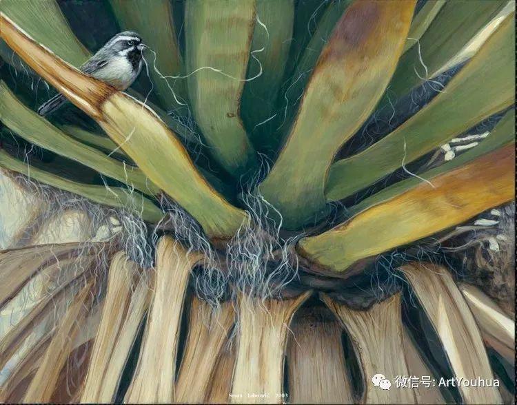动物 美国Susan Labouri作品欣赏插图91