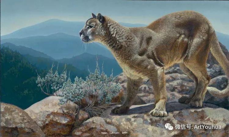 动物 美国Susan Labouri作品欣赏插图115