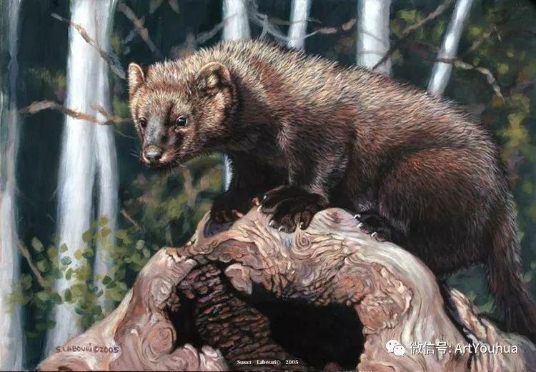 动物 美国Susan Labouri作品欣赏插图143