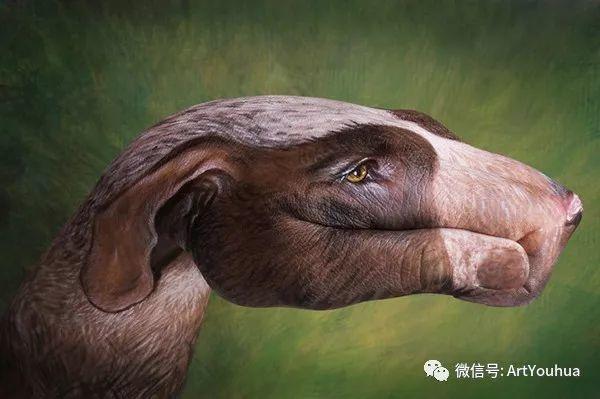 创意动物手绘  意大利Guido Daniele作品插图33