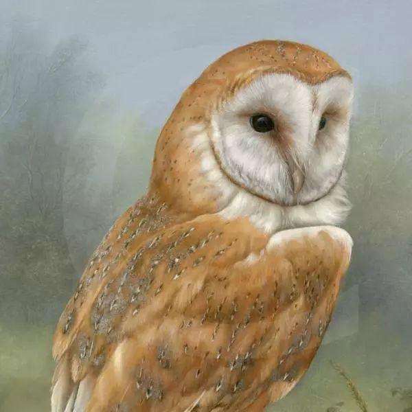 动物绘画 Carl Whitfield作品插图1