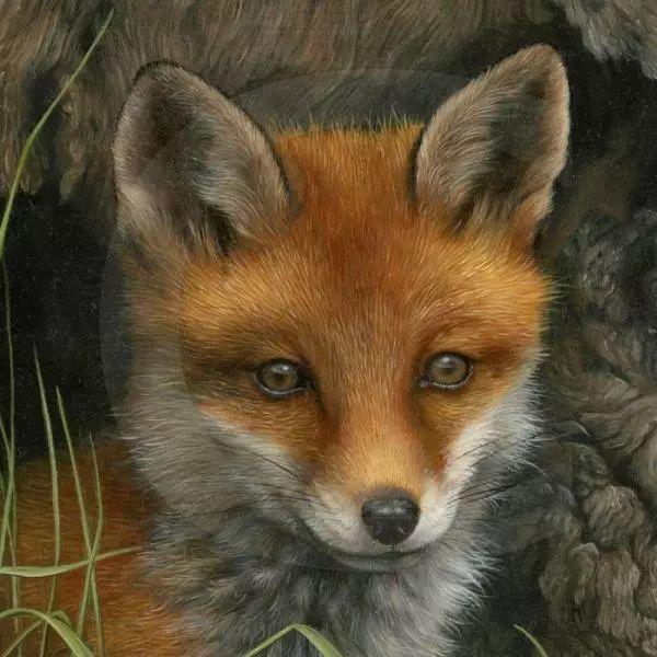 动物绘画 Carl Whitfield作品插图3