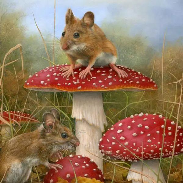 动物绘画 Carl Whitfield作品插图5