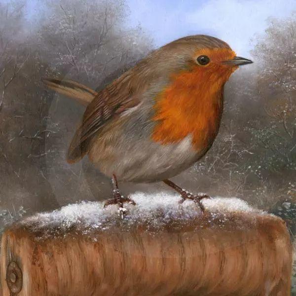 动物绘画 Carl Whitfield作品插图13