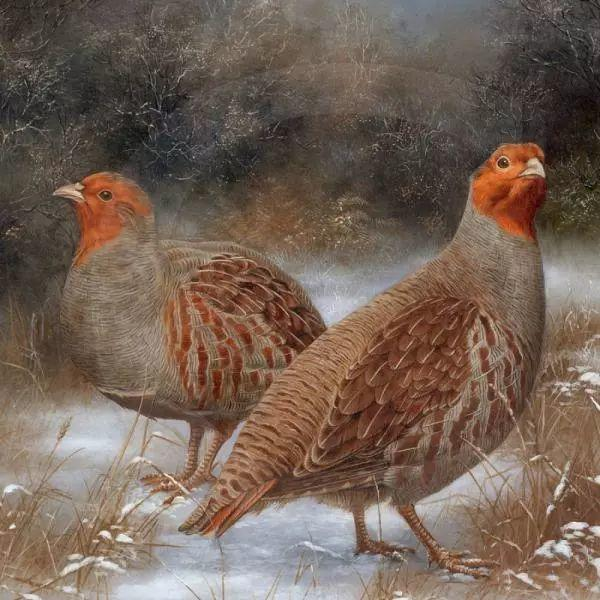 动物绘画 Carl Whitfield作品插图15
