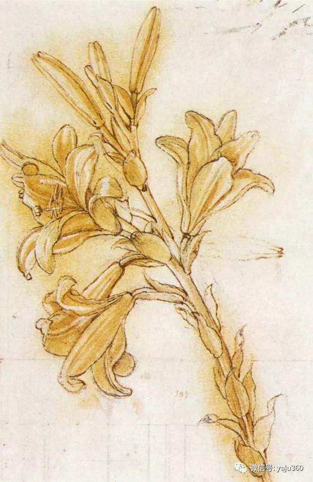 世界著名画家之达芬奇插图51