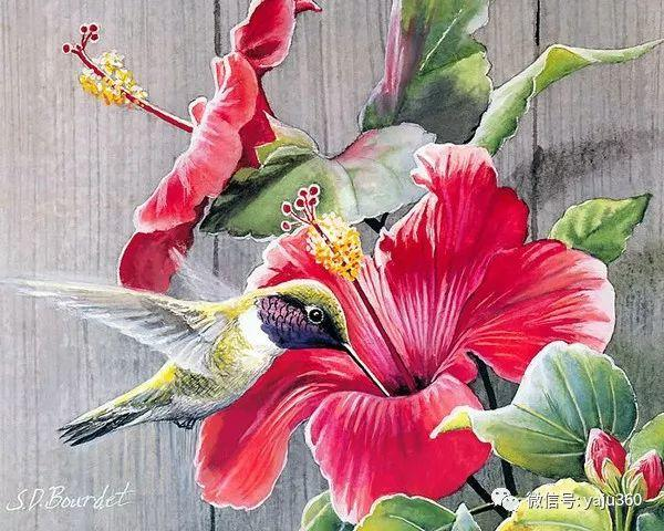 Susan Bourdet花鸟绘画插图11