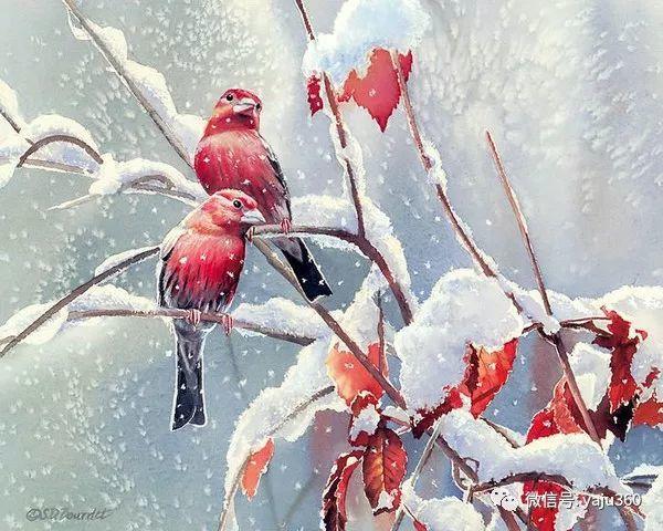 Susan Bourdet花鸟绘画插图21