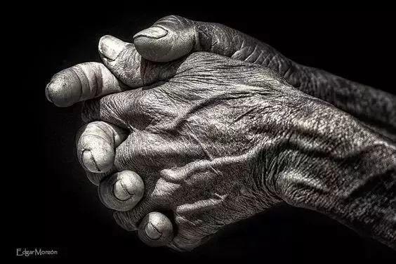 手是人的第二张脸,承载着人奋斗一生的痕迹插图