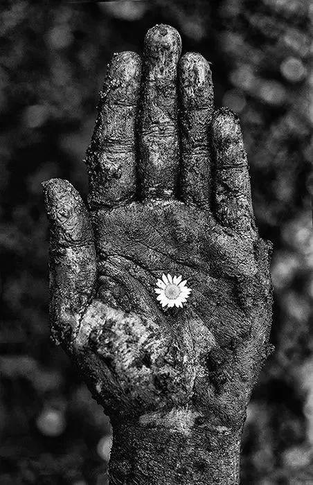 手是人的第二张脸,承载着人奋斗一生的痕迹插图3