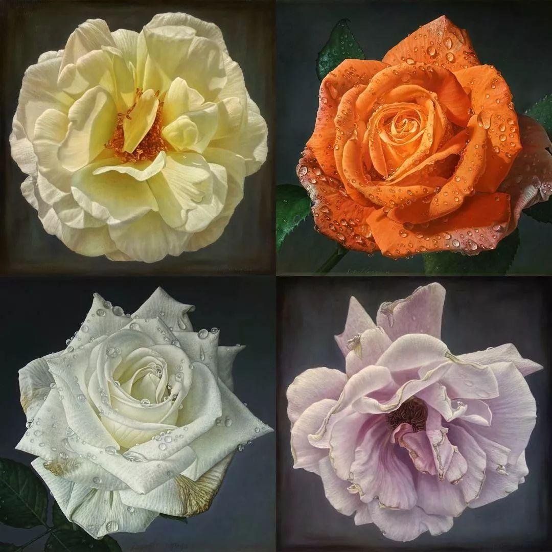 他用一块画布,就能将其变成一个露珠覆盖的玫瑰花园插图1
