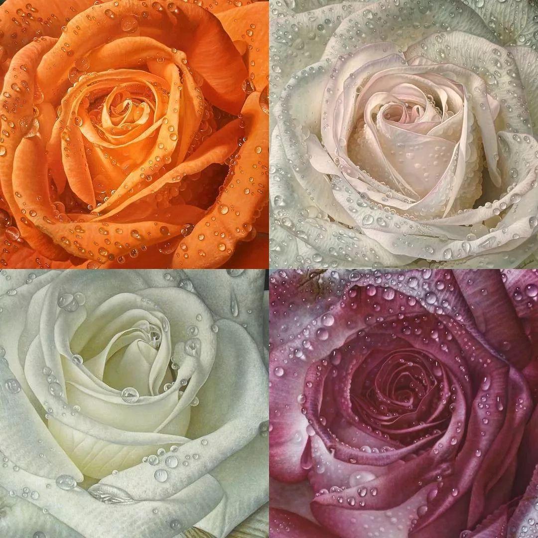 他用一块画布,就能将其变成一个露珠覆盖的玫瑰花园插图2