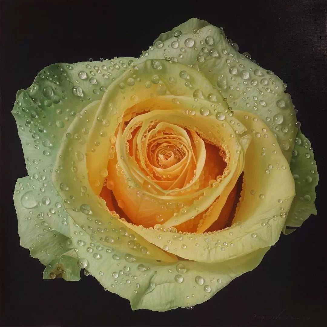 他用一块画布,就能将其变成一个露珠覆盖的玫瑰花园插图3