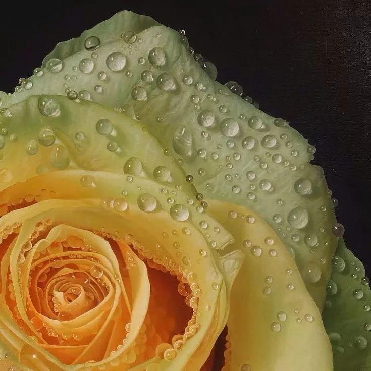 他用一块画布,就能将其变成一个露珠覆盖的玫瑰花园插图4