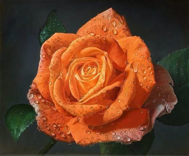 他用一块画布,就能将其变成一个露珠覆盖的玫瑰花园插图7