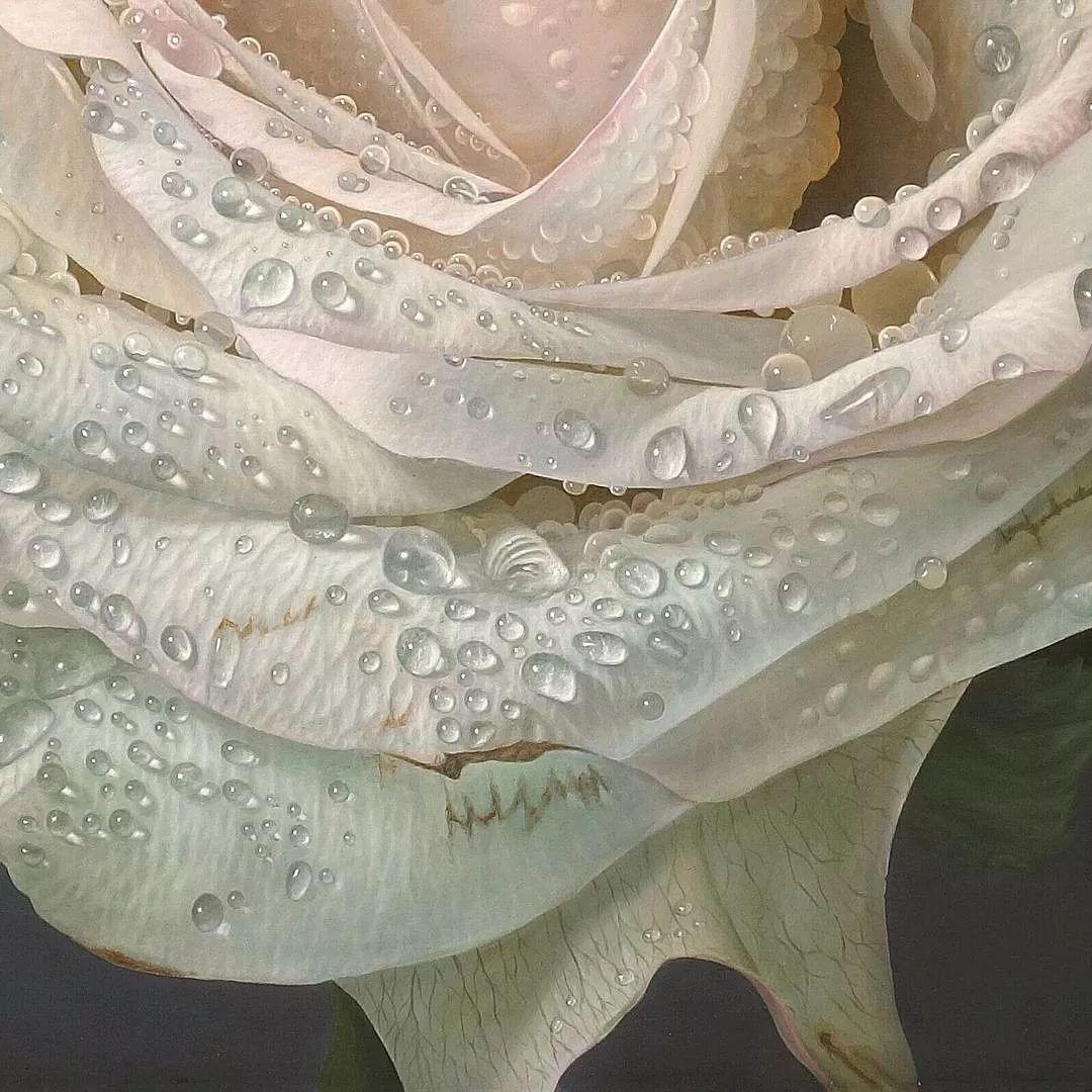 他用一块画布,就能将其变成一个露珠覆盖的玫瑰花园插图13