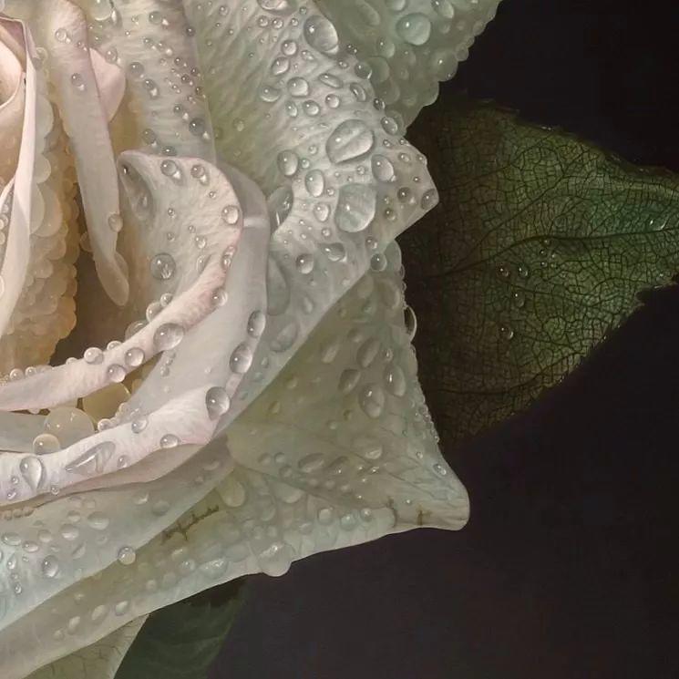 他用一块画布,就能将其变成一个露珠覆盖的玫瑰花园插图14