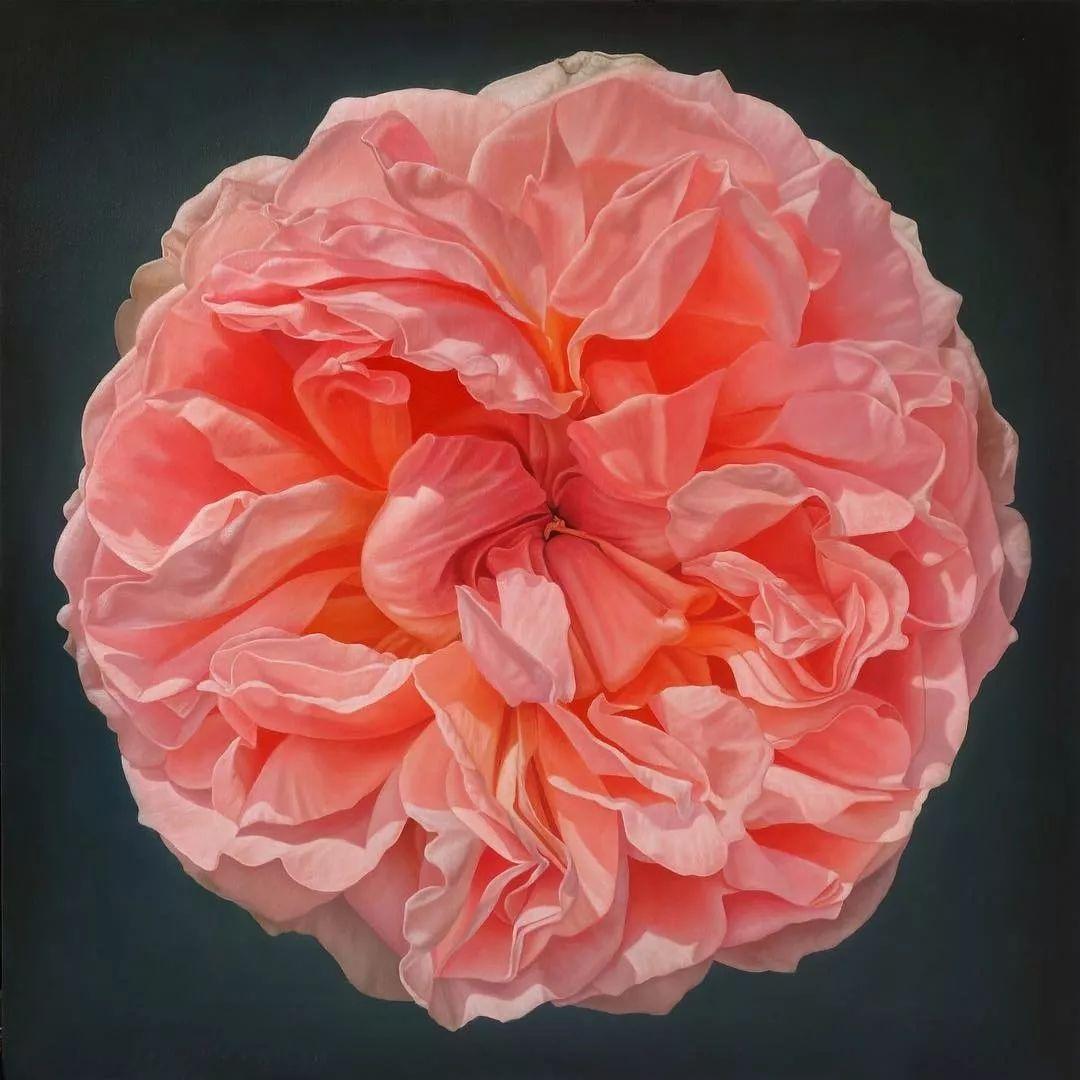 他用一块画布,就能将其变成一个露珠覆盖的玫瑰花园插图28