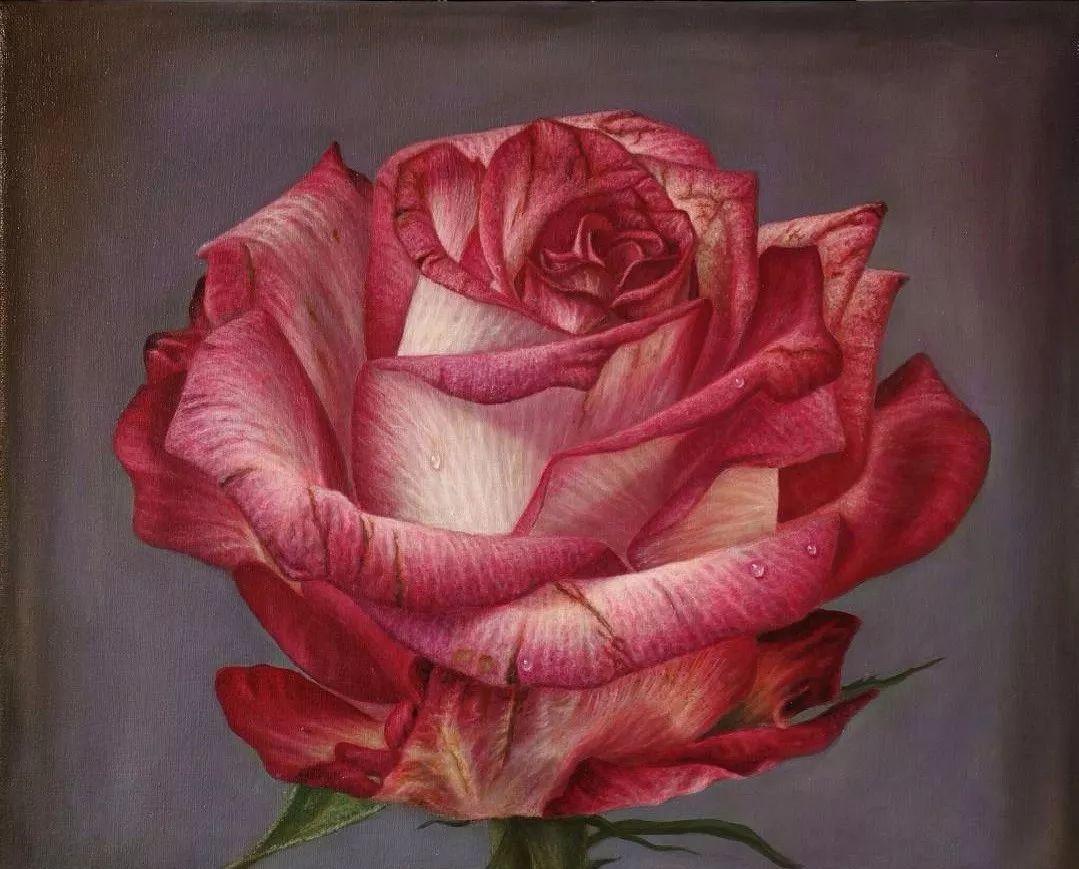 他用一块画布,就能将其变成一个露珠覆盖的玫瑰花园插图36
