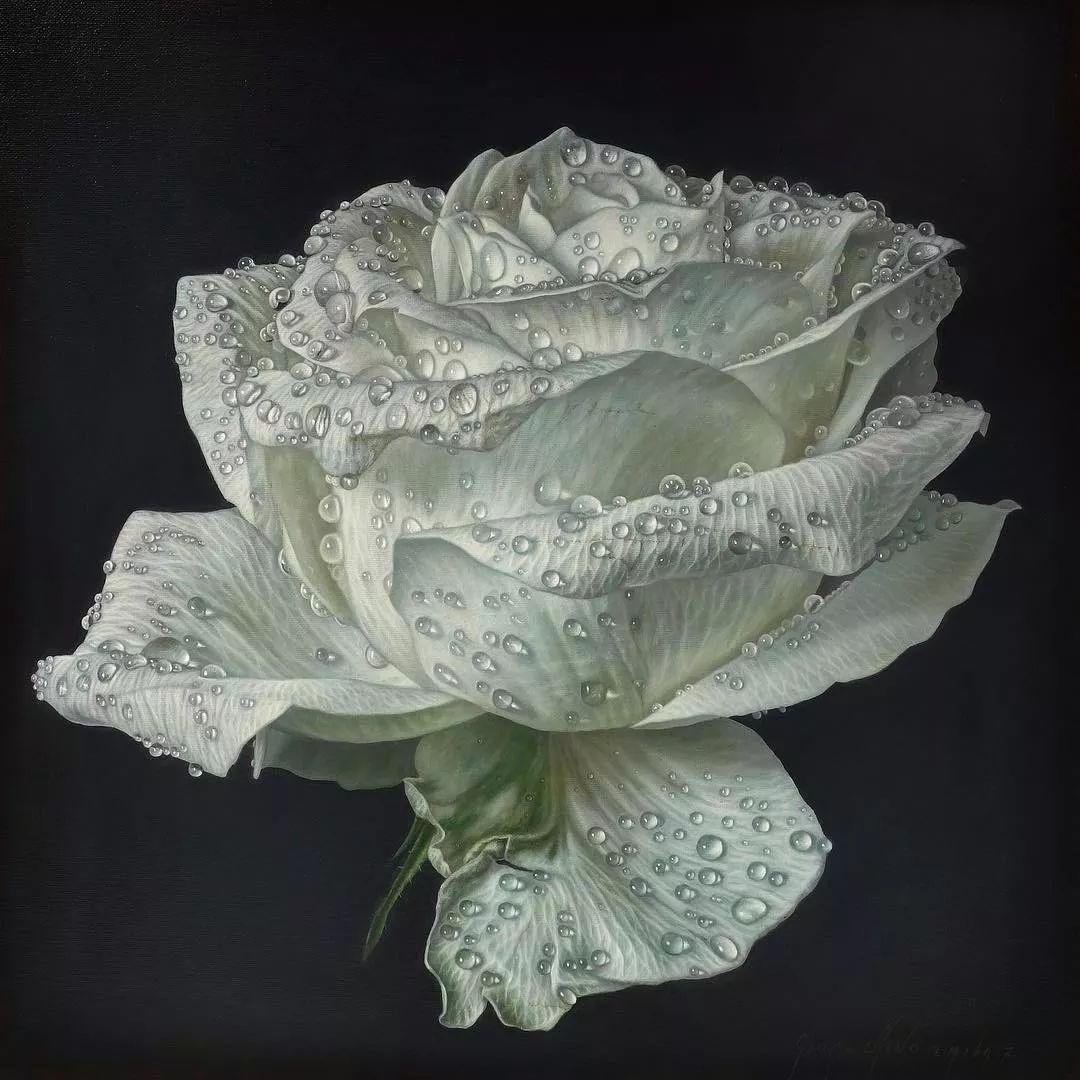 他用一块画布,就能将其变成一个露珠覆盖的玫瑰花园插图59