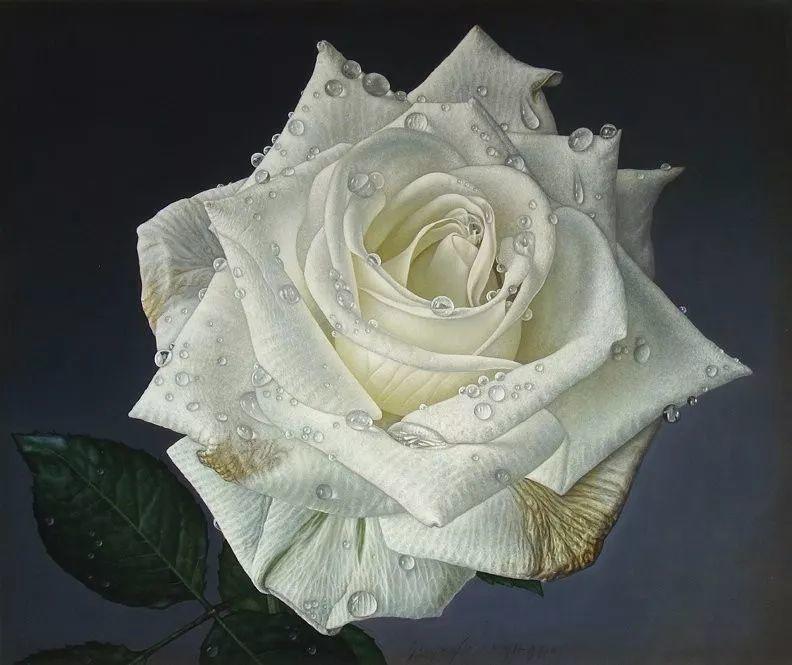 他用一块画布,就能将其变成一个露珠覆盖的玫瑰花园插图63