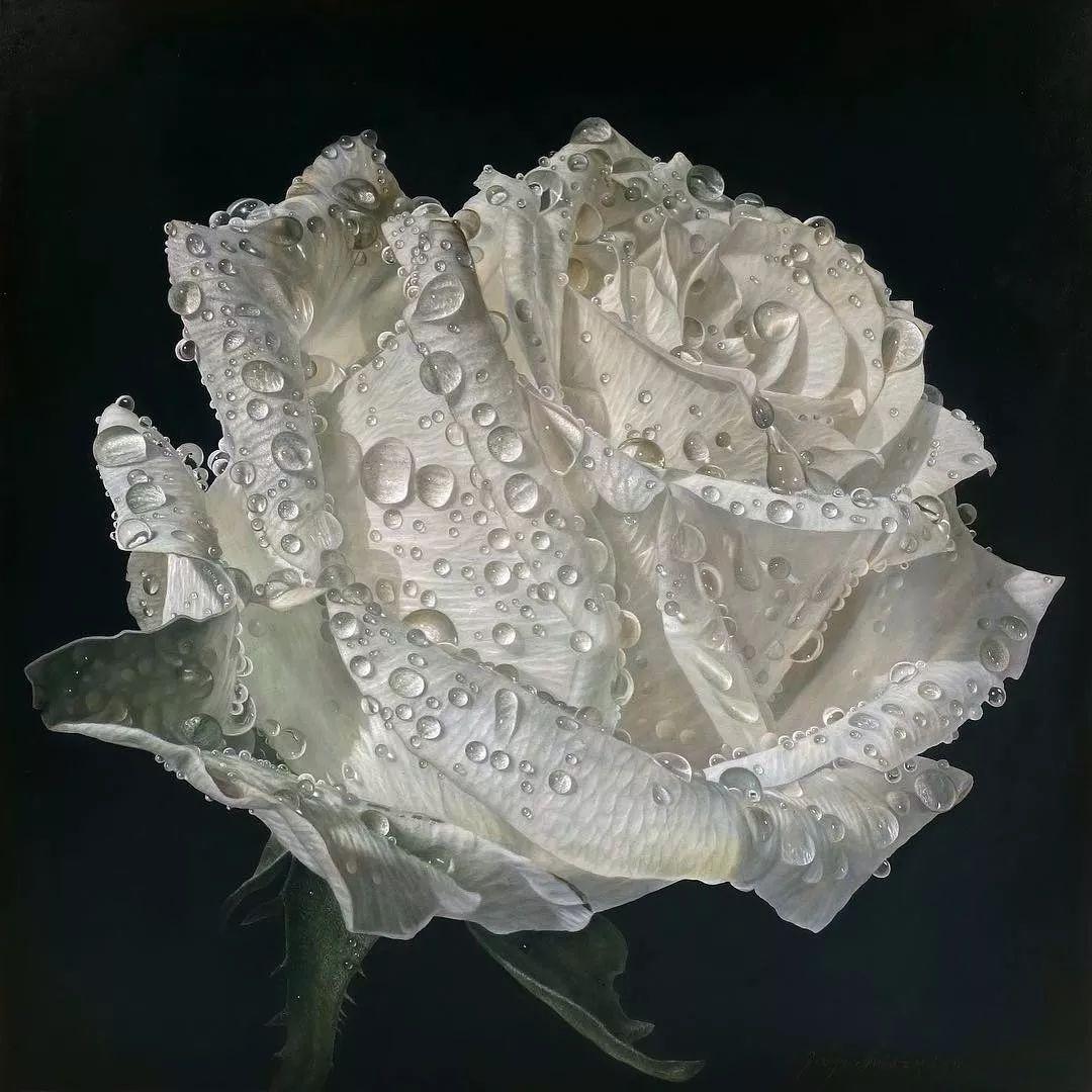 他用一块画布,就能将其变成一个露珠覆盖的玫瑰花园插图65