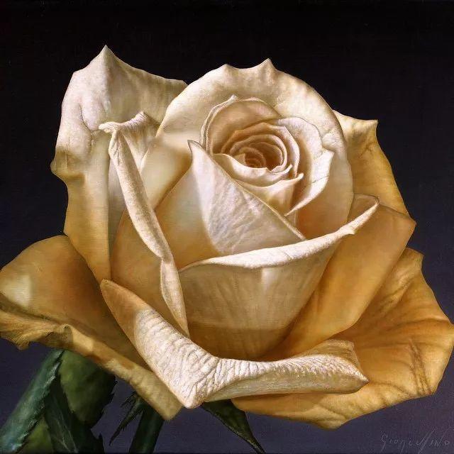 他用一块画布,就能将其变成一个露珠覆盖的玫瑰花园插图70