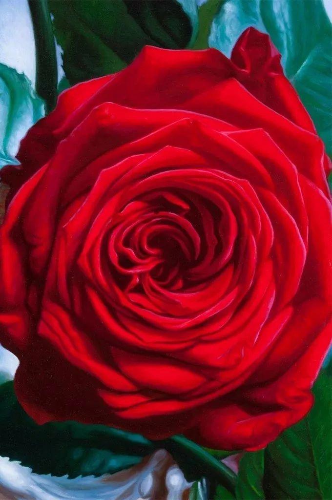 七夕,玫瑰插图13