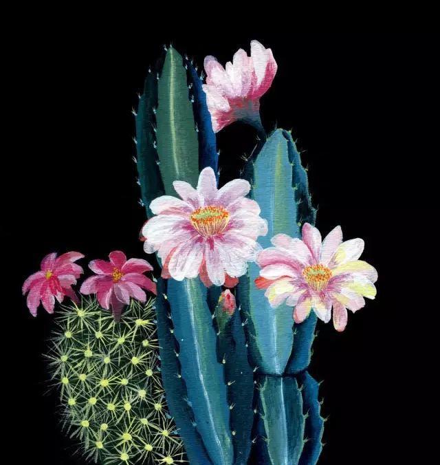 她的植物画里,总能感受到栩栩如生插图16