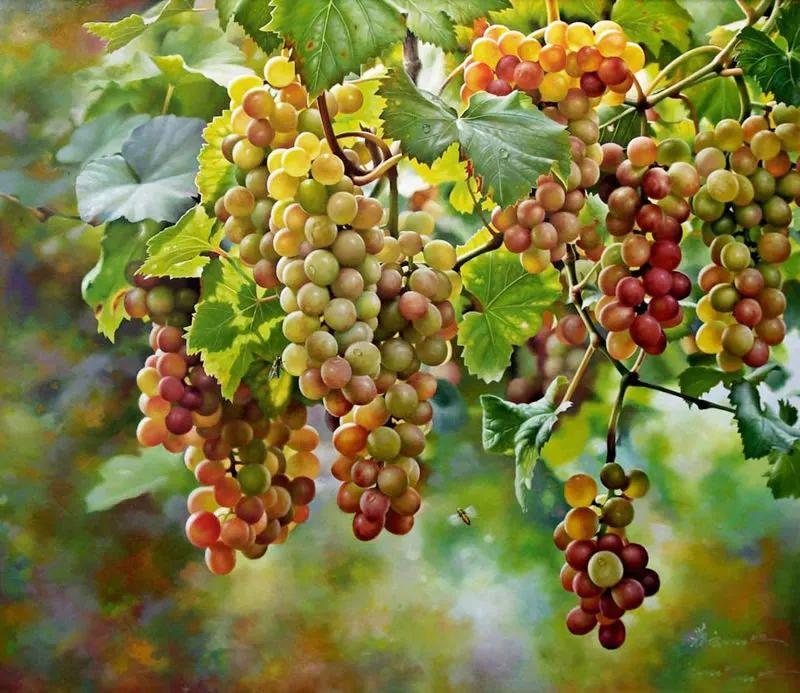 中外关于葡萄题材的绘画插图