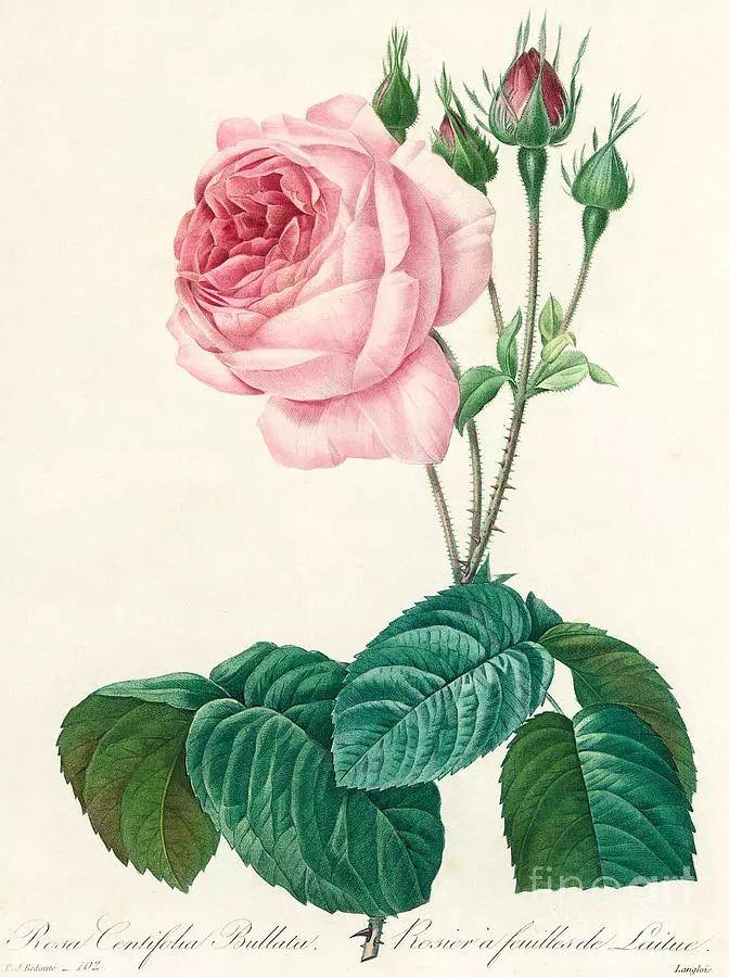 他一辈子做了一件浪漫的事:专注画花插图23