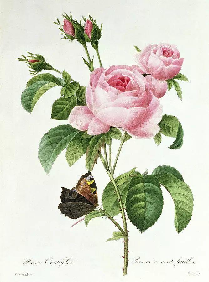 他一辈子做了一件浪漫的事:专注画花插图24