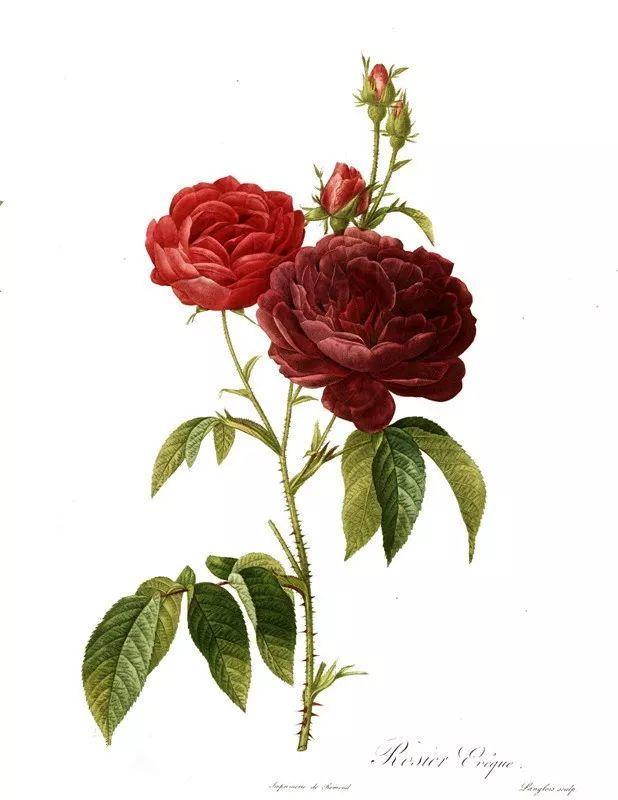 他一辈子做了一件浪漫的事:专注画花插图28