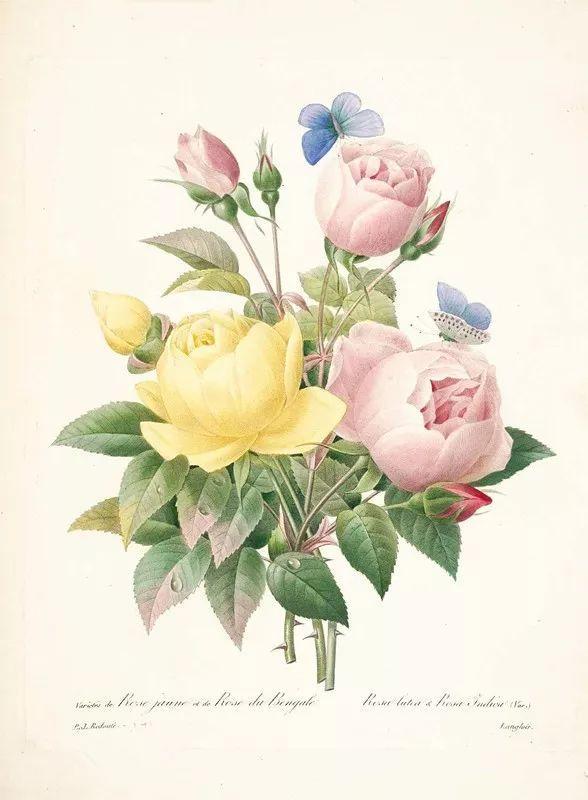他一辈子做了一件浪漫的事:专注画花插图29