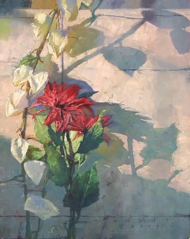 阳光、花卉和颜色 美国C·Michael Dudash插图7