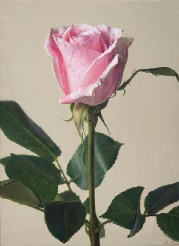 花卉写实 法国Javier Arizabalo作品插图2