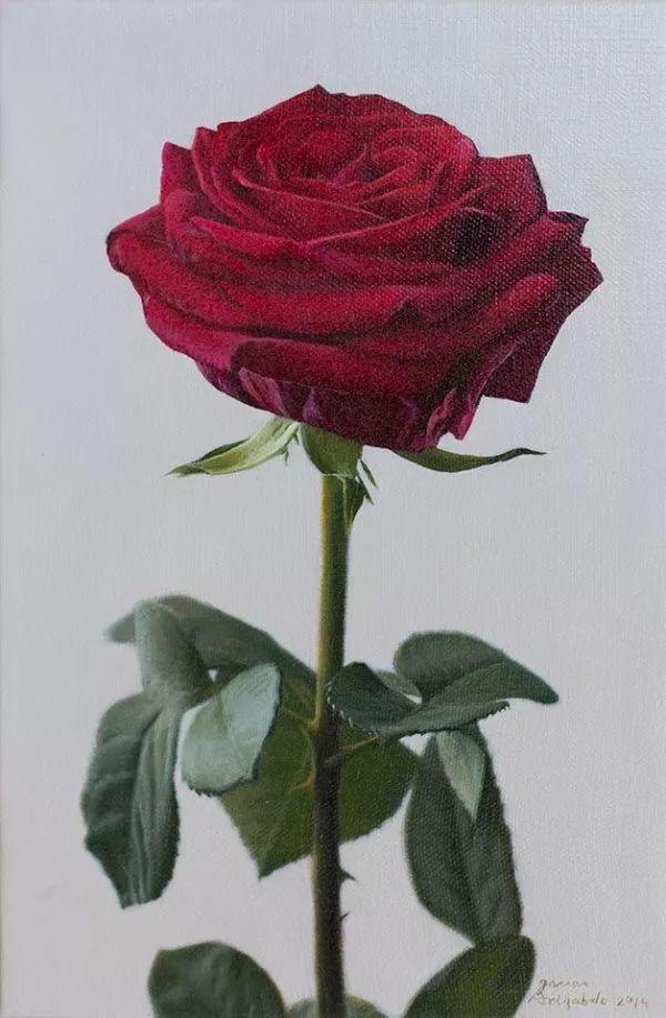 花卉写实 法国Javier Arizabalo作品插图6