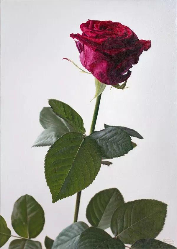 花卉写实 法国Javier Arizabalo作品插图7