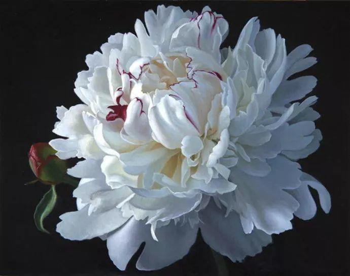 花卉绘画 美国女画家Nancy Depew作品欣赏插图15