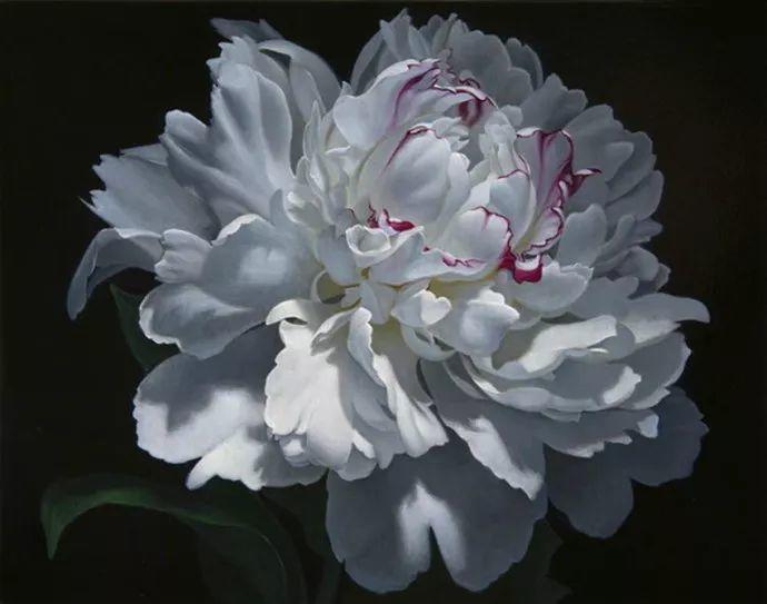 花卉绘画 美国女画家Nancy Depew作品欣赏插图17